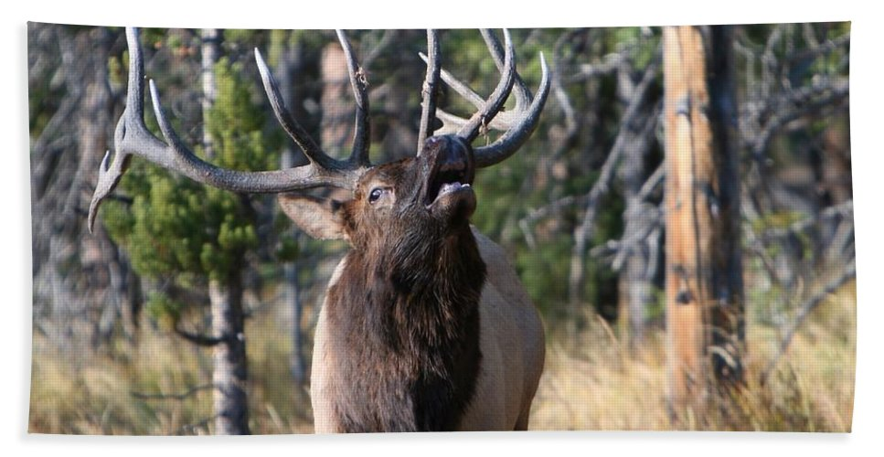 Antler Beach Towel featuring the photograph Bugle by David Andersen