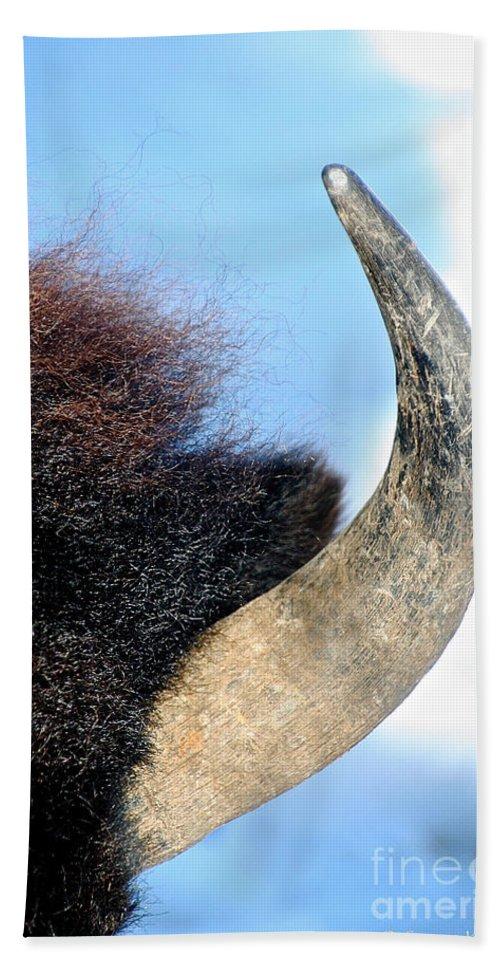 Animal Beach Towel featuring the photograph Bull Horn by Susan Herber