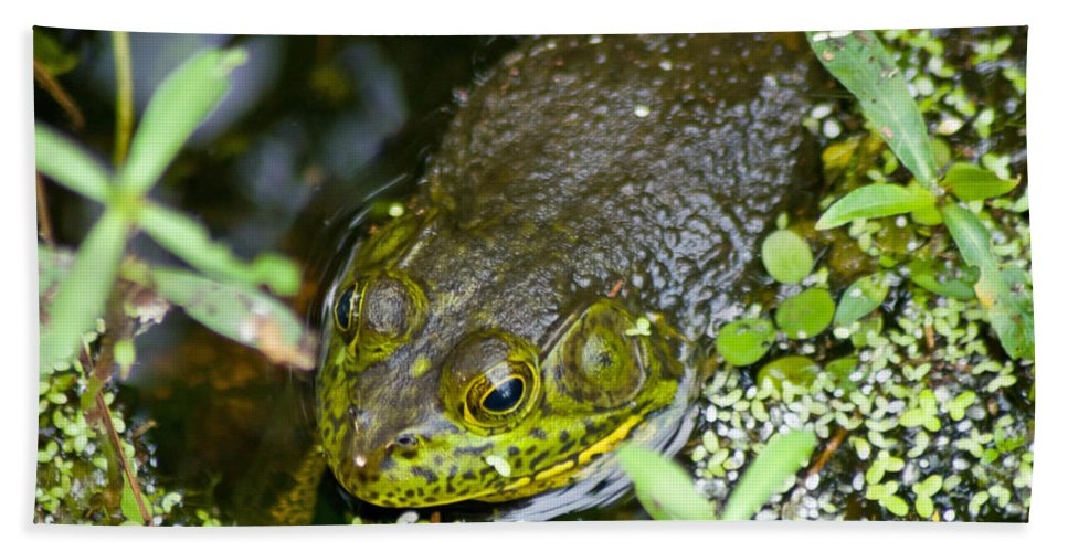 Bullfrog Beach Towel featuring the photograph Bullfrog by Stephen Whalen