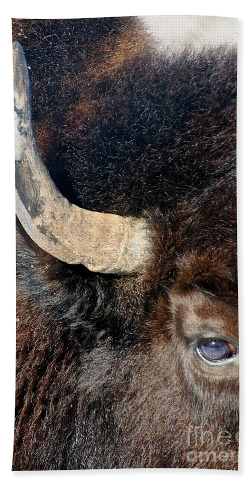 Animal Beach Towel featuring the photograph Bull's Eye by Susan Herber