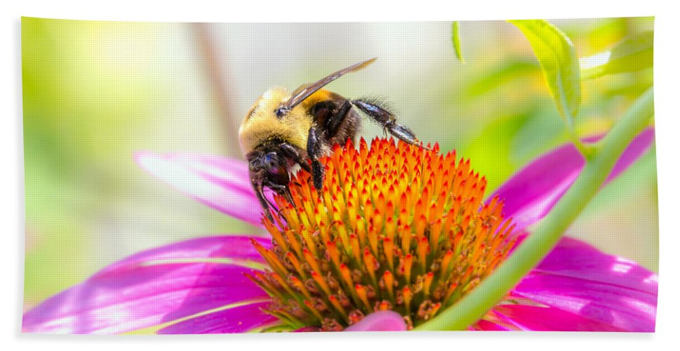Bees Beach Towel featuring the photograph Bumble Bee by Bob Orsillo