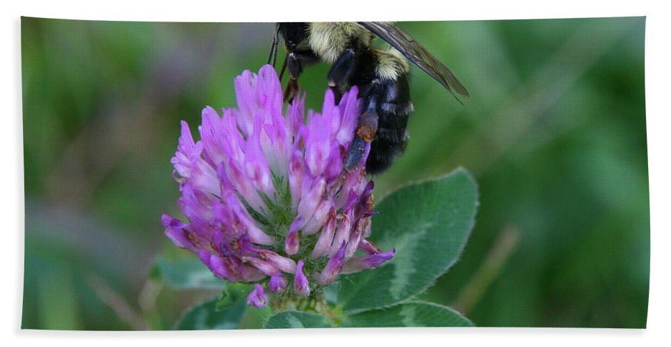Bumble Bee Beach Towel featuring the photograph Bumble Bee On Red Clover by Neal Eslinger