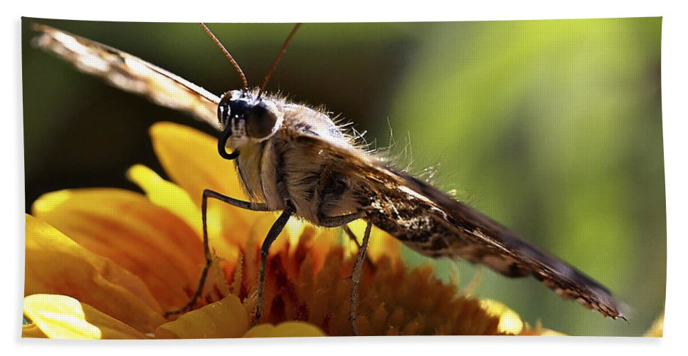 Butterfly Beach Towel featuring the photograph Butterfly 004 by Ingrid Smith-Johnsen