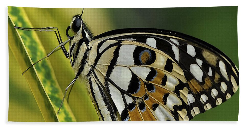 Butterfly Beach Towel featuring the photograph Butterfly 010 by Ingrid Smith-Johnsen