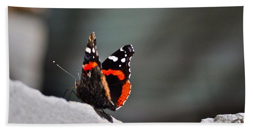 Butterfly Photograph Beach Towel featuring the photograph Butterfly Landing by Kristina Deane