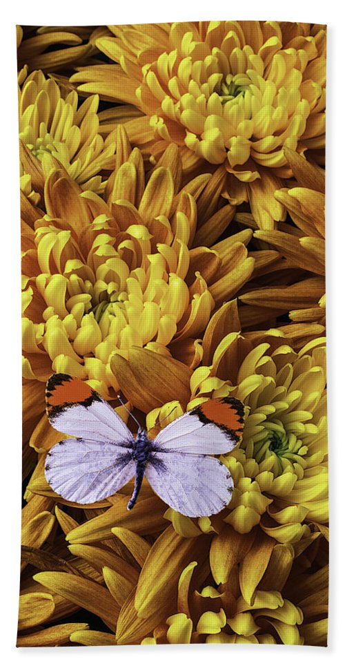 Beautiful Beach Towel featuring the photograph Butterfly Resting On Mums by Garry Gay
