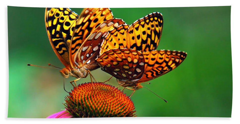 Butterflies Beach Towel featuring the photograph Butterfly Twins by Christina Rollo
