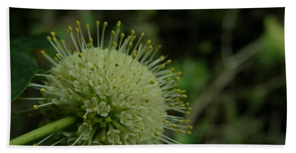 Plant Beach Towel featuring the photograph Buttonbush by Kimberly Mohlenhoff