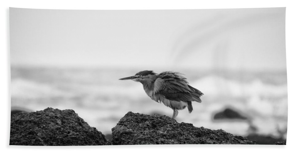 Heron Beach Towel featuring the photograph By The Seaside by Douglas Barnard