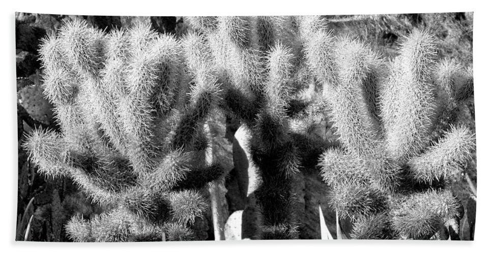 Cactus Beach Towel featuring the photograph Cactus In Bw by Timothy Hacker