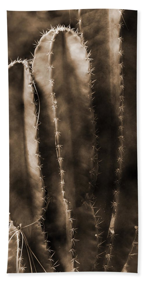 Panama Beach Towel featuring the photograph Cactus Sepia Tone Panama by Greg Kluempers