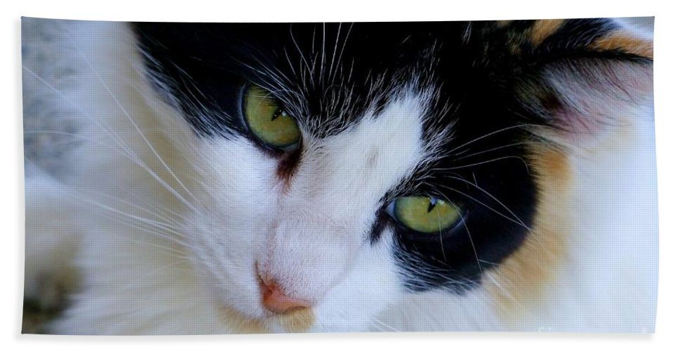 White Beach Towel featuring the photograph Calico 1 by Mary Deal