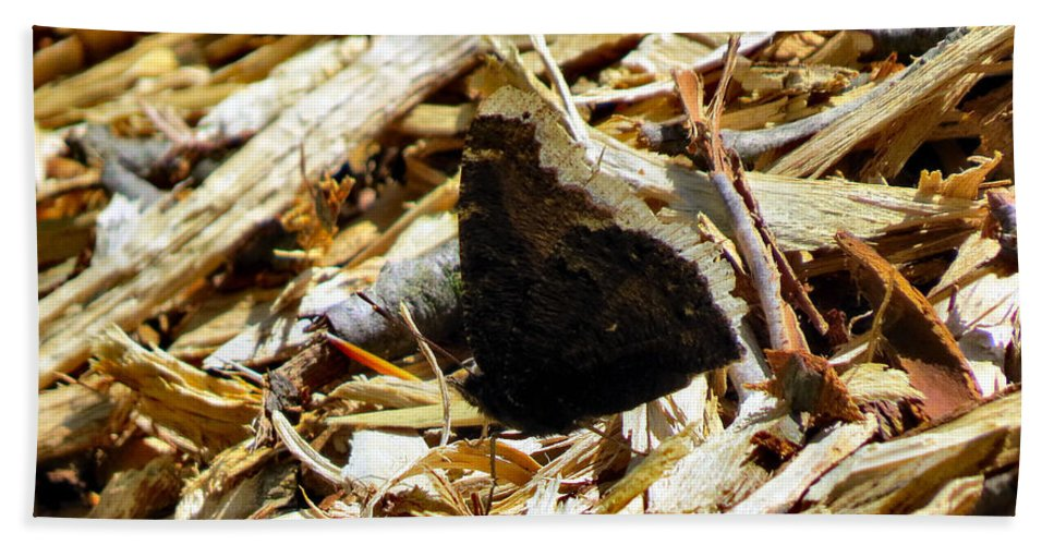 Moth Beach Towel featuring the photograph Camouflage by Art Dingo