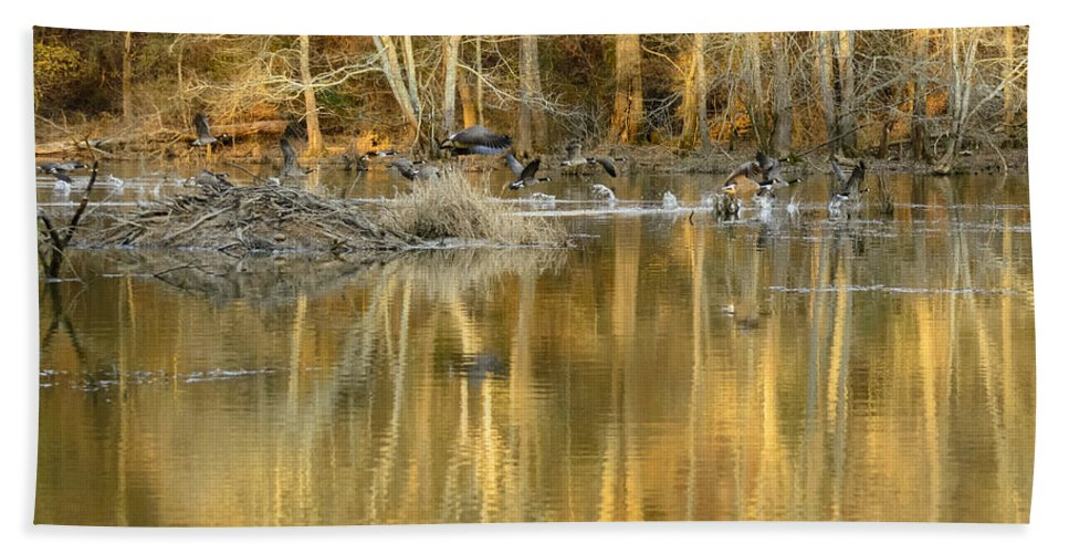 Anatidae Beach Towel featuring the photograph Canada Geese On A Golden Morning by Steve Samples