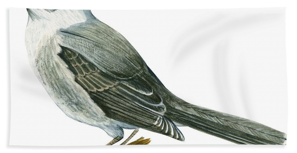 No People; Horizontal; Side View; Full Length; White Background; One Animal; Wildlife; Close Up; Illustration And Painting; Zoology; Wing; Feather; Tail; Perching; Branch; Bird; Canada Jay; Perisoreus Canadensis; Grey Beach Towel featuring the drawing Canada Jay by Anonymous
