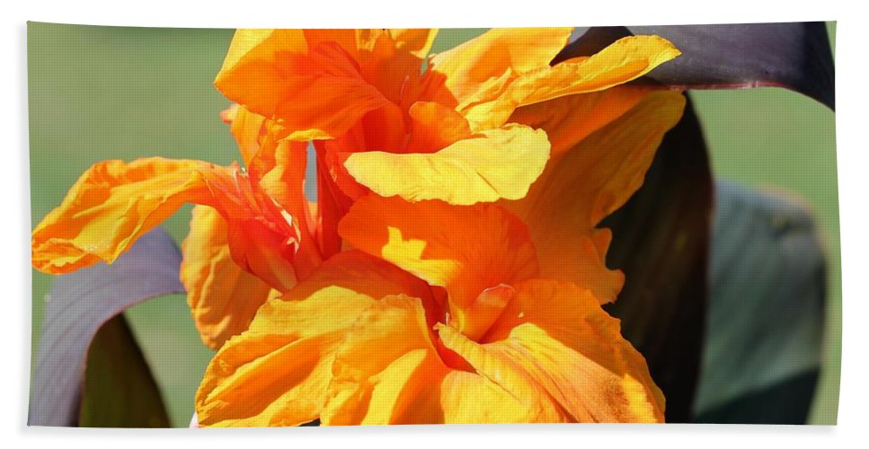 Mccombie Beach Towel featuring the photograph Canna Lily Named Wyoming by J McCombie