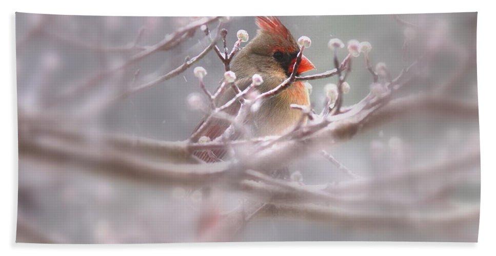 Cardinal Beach Towel featuring the photograph Cardinal - Bird - Lady In The Rain by Travis Truelove