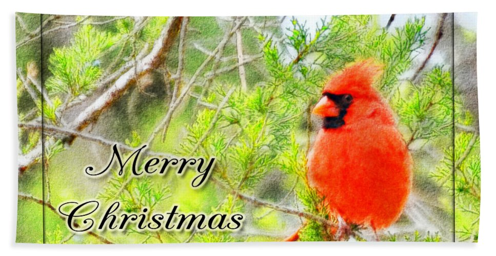 Animals Beach Towel featuring the photograph Cardinal Christas Card by Debbie Portwood
