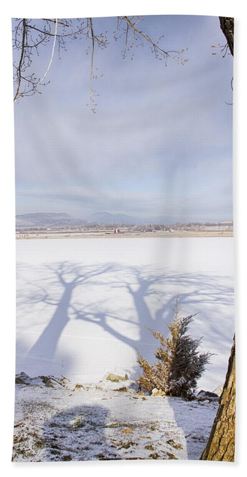 Cottonwood Trees Beach Towel featuring the photograph Casting Big Shadows by James BO Insogna
