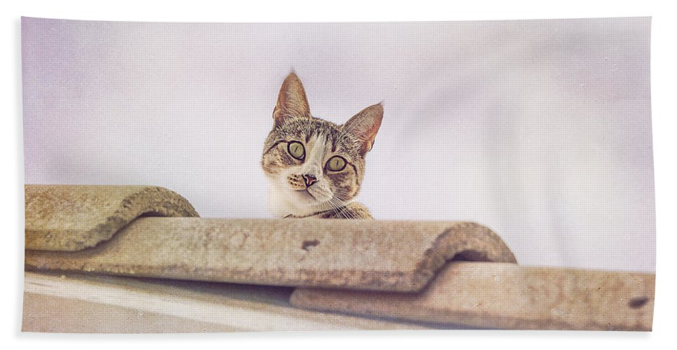 Cat Beach Towel featuring the photograph Cat On The Hot Tin Roof by Angela Stanton