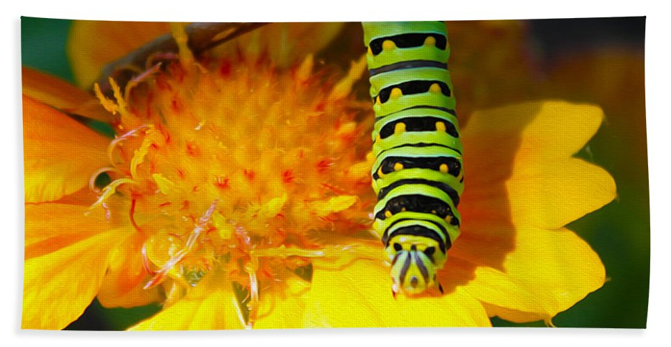 Nature Beach Towel featuring the photograph Caterpillar On The Prowl by Nina Silver