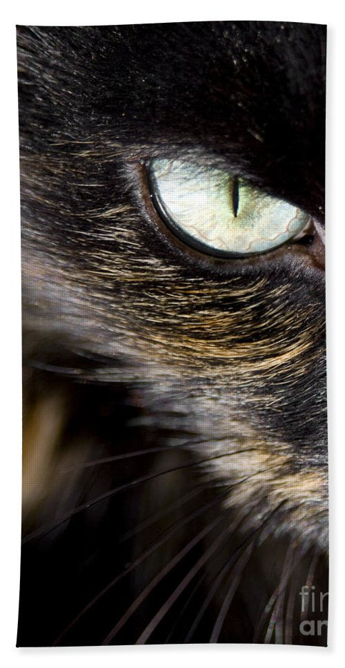 Animal Beach Towel featuring the photograph Cats Eye by Tim Hester