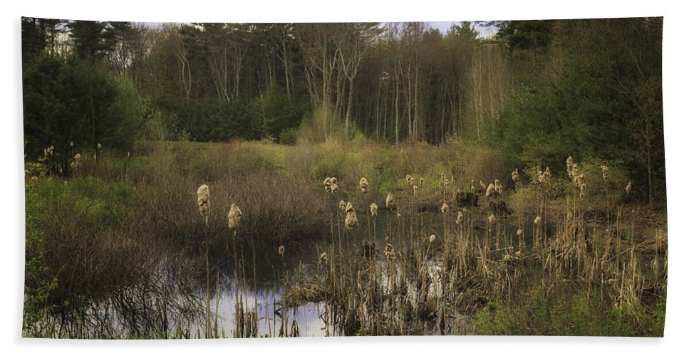 Cattails Beach Towel featuring the photograph Cattails by Fran Gallogly