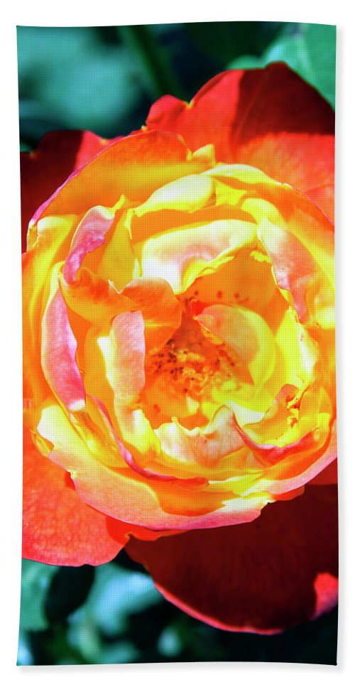 Rose Beach Towel featuring the photograph Celebration Rose Palm Springs by William Dey