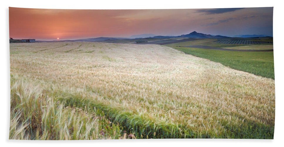 Plants Beach Towel featuring the photograph Cereal Fields by Guido Montanes Castillo