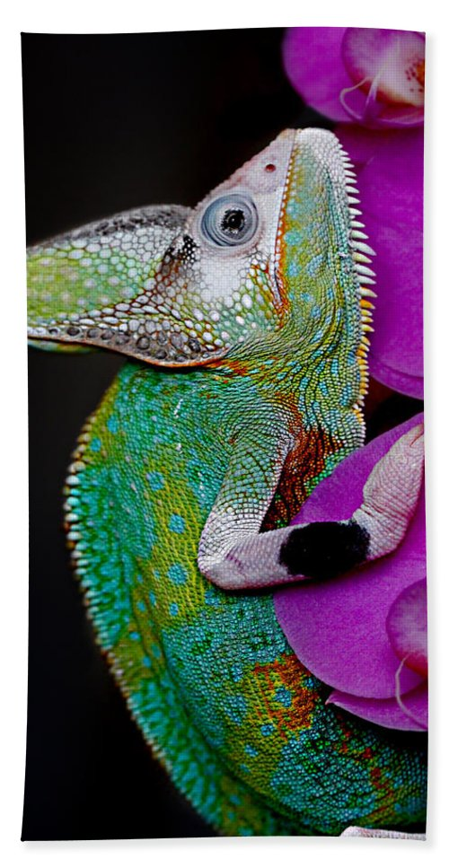 Lizard Beach Towel featuring the photograph Chamaeleon by Heike Hultsch