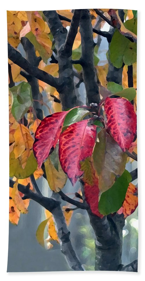 Tree Beach Towel featuring the photograph Changing Colors by Jeanne A Martin