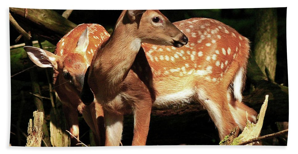 Fawn Beach Towel featuring the photograph Checking The Back Trail by Douglas Stucky