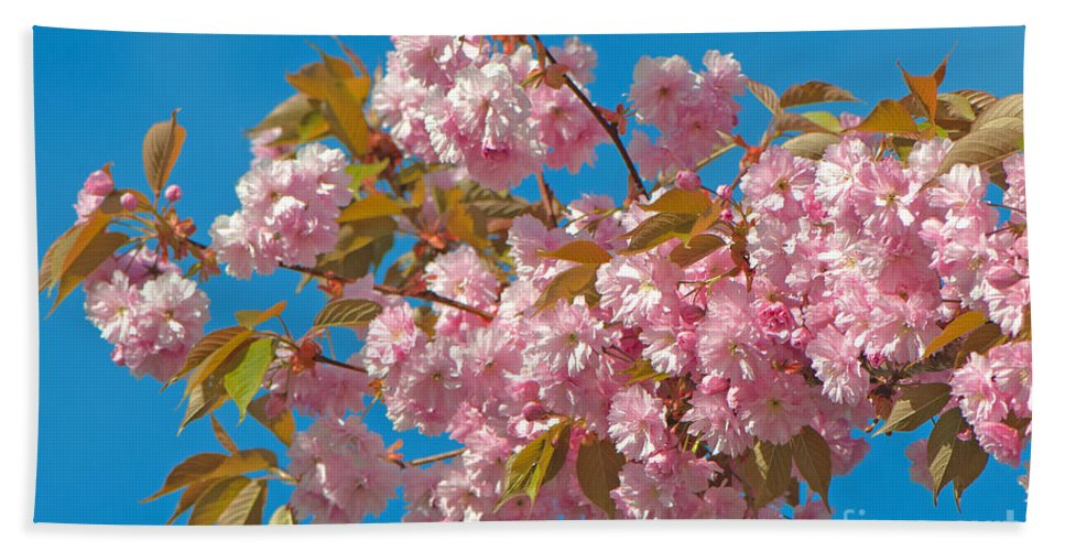 Cherry Blossoms Beach Towel featuring the photograph Cherry Blossoms 2 by Sharon Talson