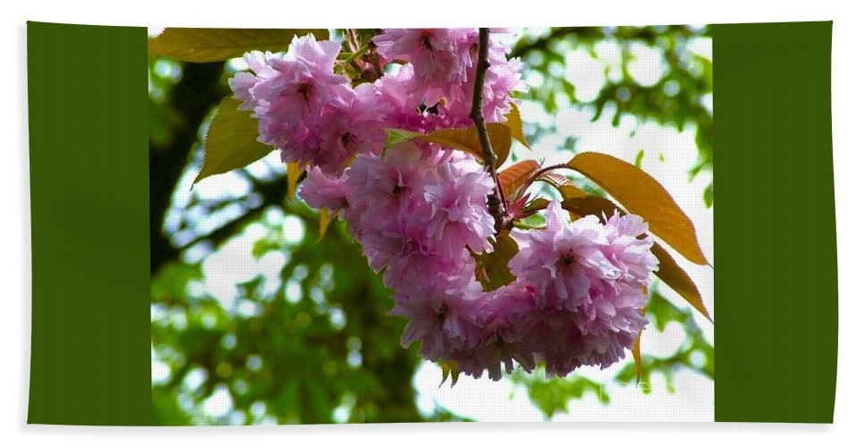 Cherry Tree Beach Towel featuring the photograph Cherry Tree Blossom by Joan-Violet Stretch