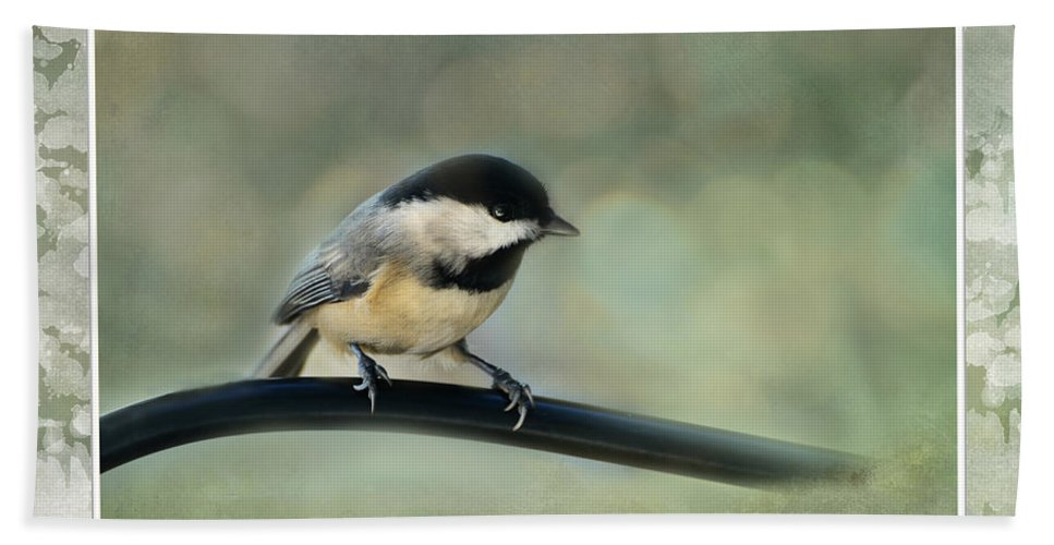 Nature Beach Towel featuring the photograph Chickadee With Frame by Debbie Portwood
