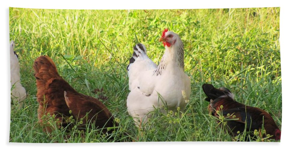 Livestock Beach Towel featuring the photograph Chickens In Tall Grass by Michelle Powell