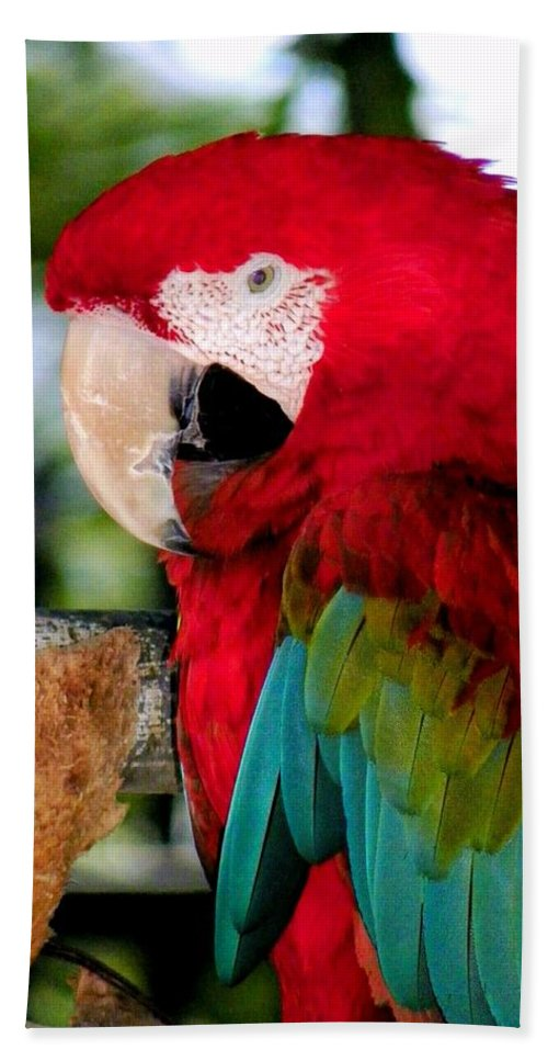 Parrot Beach Towel featuring the photograph Chowtime by Karen Wiles