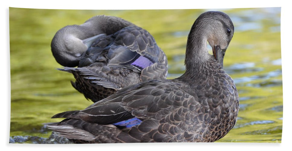 Ducks Beach Towel featuring the photograph Ducks On Green by Glenn Gordon