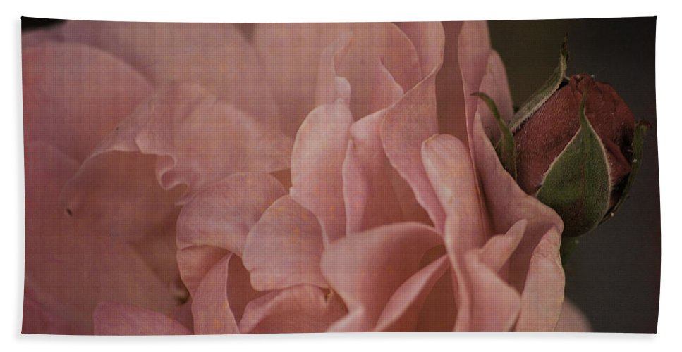 Rose Beach Towel featuring the photograph Close To Me by Sharon Elliott