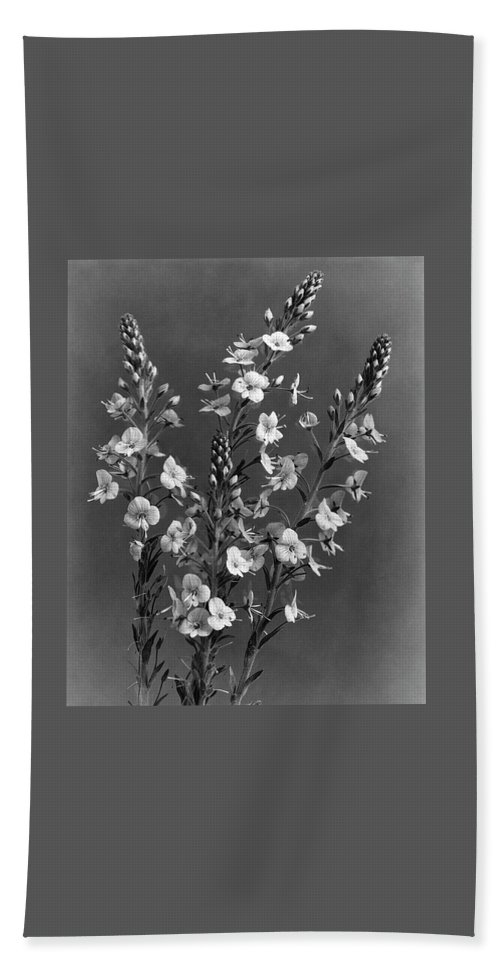Flowers Beach Towel featuring the photograph Close Up Of Gentian Speedwell Flowers by J. Horace McFarland