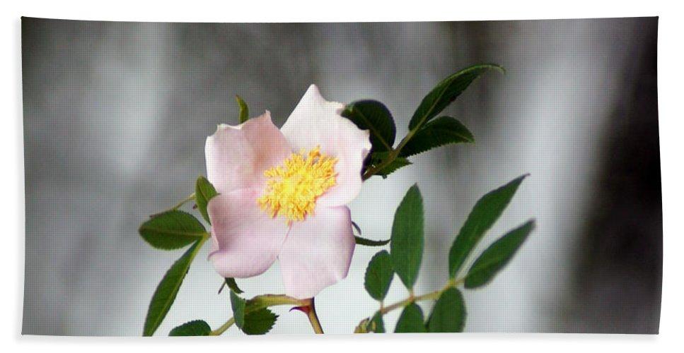 Cloud Mountain Cherokee Rose Beach Towel featuring the photograph Cloud Mountain Cherokee Rose by Kim Pate