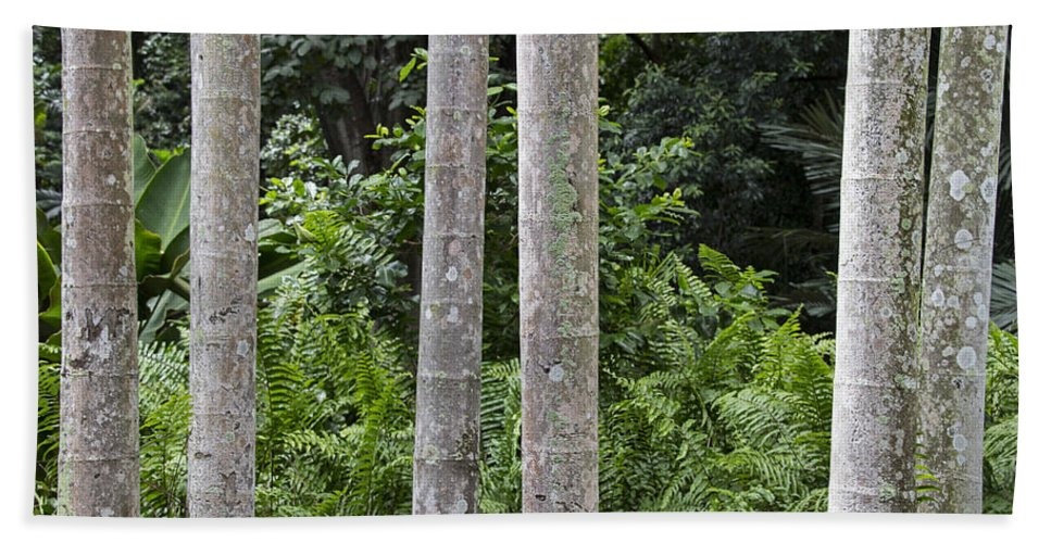 Palm Trees Beach Towel featuring the photograph Cluster by Douglas Barnard