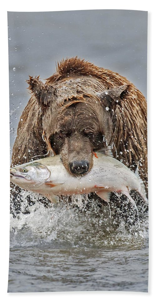 Coastal Beach Towel featuring the photograph Coastal Brown Bear With Salmon IIi by Gary Langley