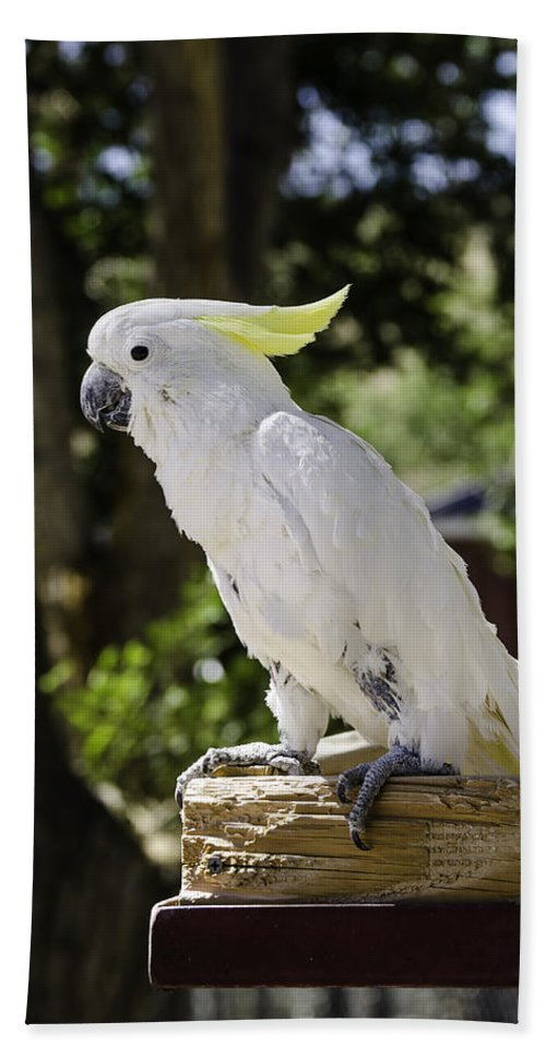 976db7aeab96 Cockatoo Beach Towel featuring the photograph Cockatoo White Parrot by  LeeAnn McLaneGoetz McLaneGoetzStudioLLCcom
