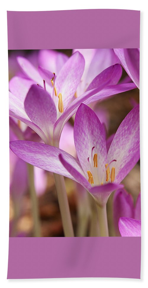 Purple Flower Beach Towel featuring the photograph Colchicum Curves by Gill Billington