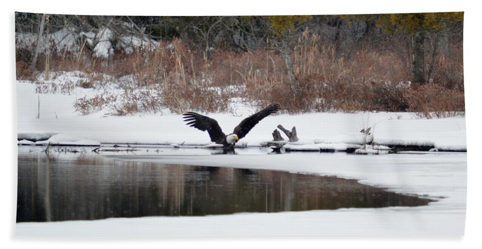 Bald Eagle Beach Towel featuring the photograph Cold Bath by Thomas Phillips