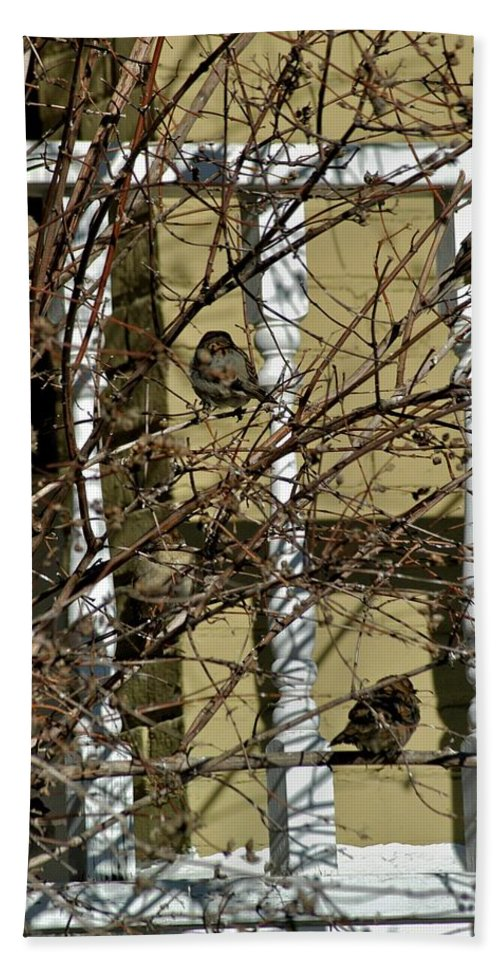 Birds Beach Towel featuring the photograph Cold Birds by Joseph Yarbrough