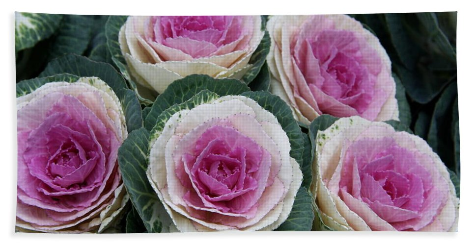 Ornamatel Cabbage Beach Towel featuring the photograph Colorful Cabbage by Christiane Schulze Art And Photography