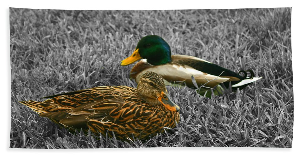 Duck Beach Towel featuring the photograph Colorful Ducks by Michael Porchik