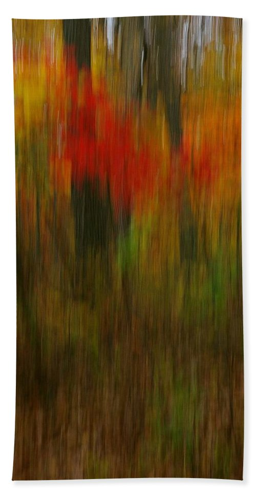 Woods Beach Towel featuring the photograph Coloring The Woods by Randy Pollard